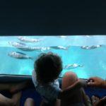 Vista Submarina - Creuers Mare Nostrum - Actividades Nauticas - Lescala - Empordaturisme