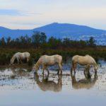 Parques Naturales - Aiguamolls de lemporda - empordaturisme